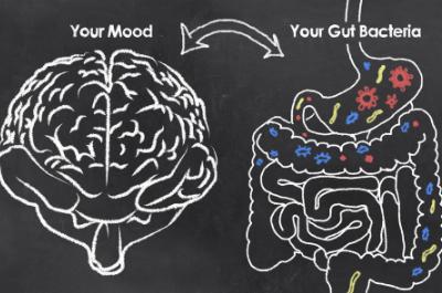mikro+ Gehirn Darm Achse